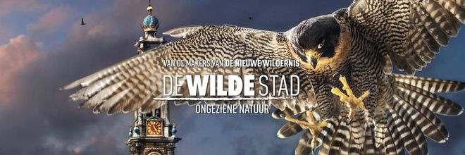 "'De Wilde Stad' shows animals in Amsterdam as ""urban legends"""